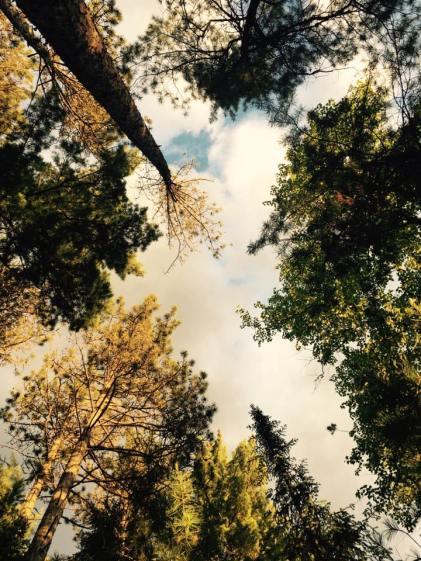 Trees Drew
